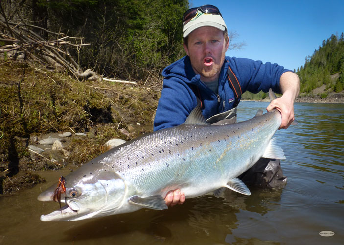 Travel - Atlantic Salmon